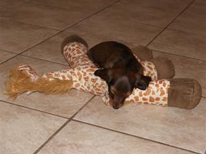 Giraf nedlagt